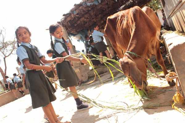 Farm - To - Fork Education